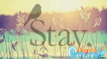 Stay Stabat Mater
